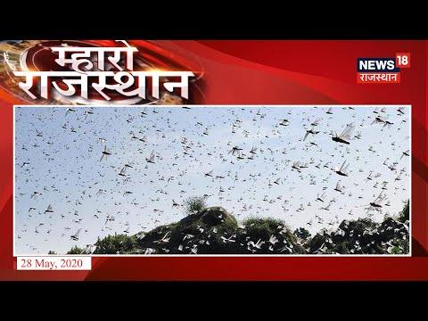 Rajasthan में चल रहा है टिड्डियों का टेरर, क्या है इस टेरर का हल?