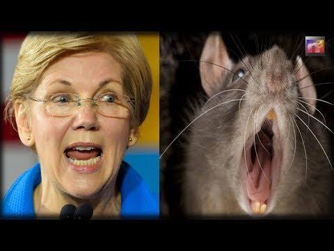 Elizabeth Warren's Pet Project Gets UNEXPECTED Visitors