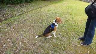 ビリーが家へ来て一週間。 はじめて車に乗せて近くの公園へ。