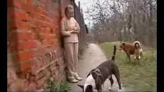 Bull-terrier Jumping