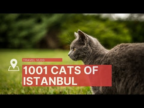 Why are there so many cats in Istanbul, Turkey?