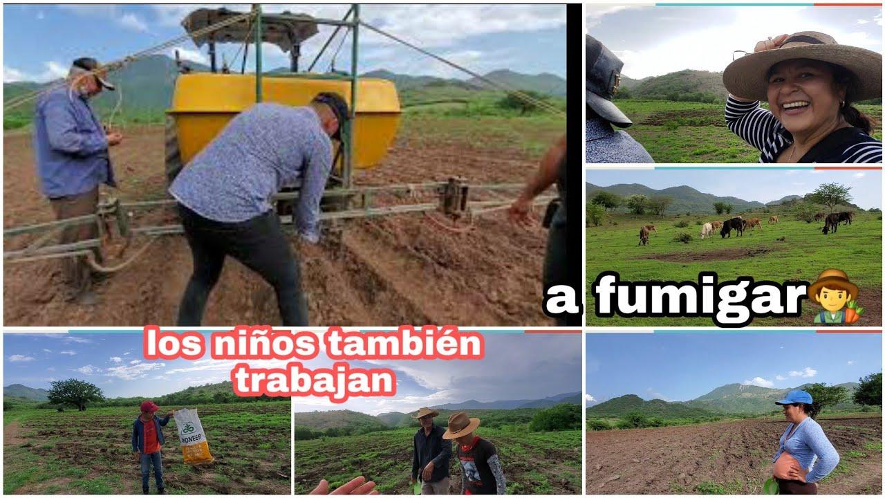Fumigando lo sembrado😱+ tambien los niños en Guerrero trabajan 😁el porque le gusta grabar a mi apa☺