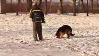 Casting dla psów policyjnych (1)