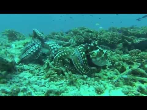 Cousin Island Marine Reserve