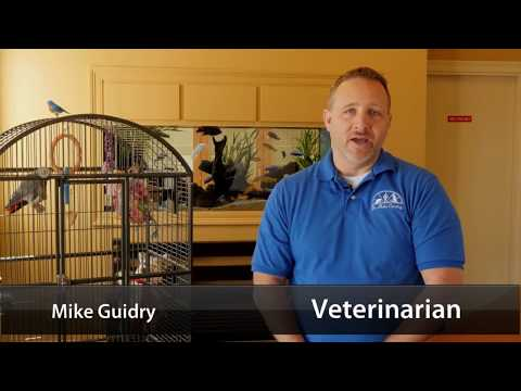 Animal Care Hospital - Short | Lafayette, LA