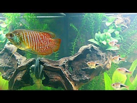 juwel aquarium rio 180 l gesellschaftsbecken 5 tage nach einzug der fische teil 1 hd youtube