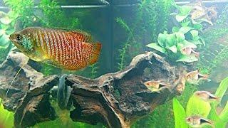 JUWEL Aquarium Rio 180 l Gesellschaftsbecken 5 Tage nach Einzug der Fische  Teil 1 HD