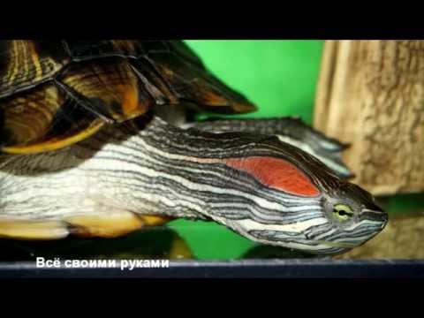 Уход и содержание красноухих черепах!/Care and maintenance turtles!