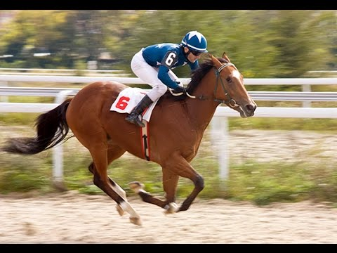 Repair the Tear: Healing Sports Injuries in Horses and Humans - Science Cafe