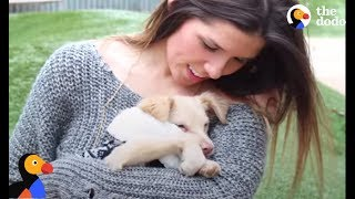 Prancing Dog Finds Forever Home With BEST Foster Mom | The Dodo