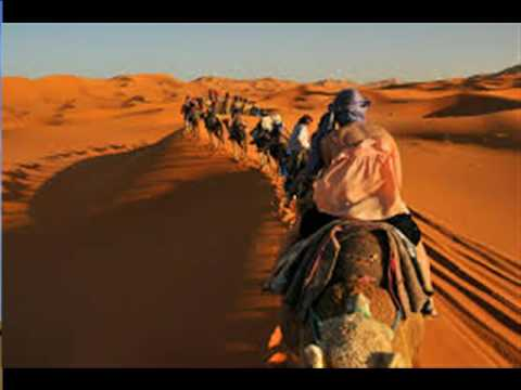 Camel Ride in the Sahara Desert, Morocco  Camels in the Outback