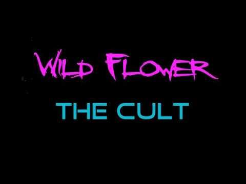 The cult - wild flower - LYRICS