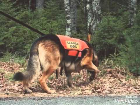 Search And Rescue Dogs In Action