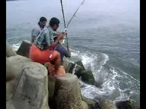 Threadfin Salmon Caught at munambam Kochi