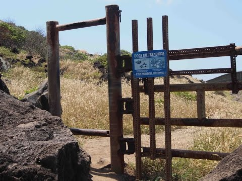 Legend of the Predator-proof Fence : Plants are Cool, Too! Hawaii