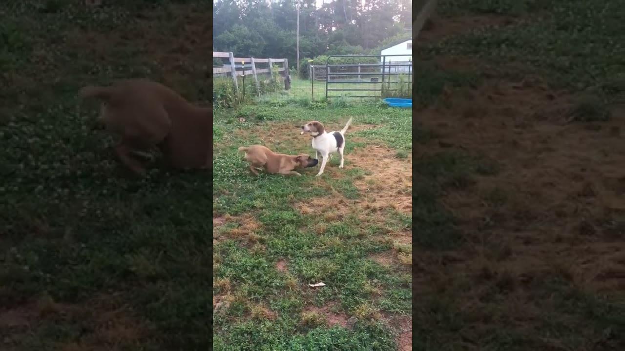 North Carolina Dog Rescue - ADOPTIONS - Rescue Me!