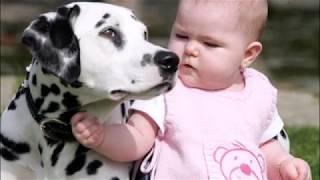 ТОП-10 ЛУЧШИХ ПОРОД СОБАК ДЛЯ ДЕТЕЙ  TOP-10 BEST BREEDS DOG FOR CHILDREN  Породы собак