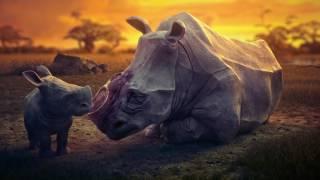 Don't let the dream go extinct (2016) Короткометражный мультфильм и социальный ролик