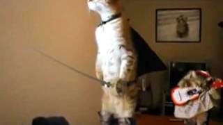 Кот стоит на задних лапах. Пародия.