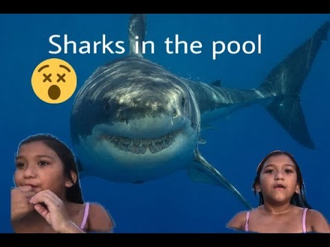 sharks in our pool (short film)