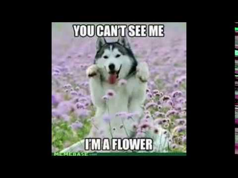 Funny Meme Pictures Of Dogs : Funny dog memes! :d youtube
