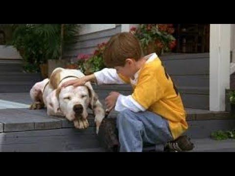 Homeward Bound II Lost in San Francisco (1996) Movie - Michael J. Fox, Sally Field & Ralph Waite