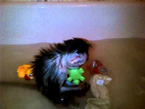 Destiny Bath Time