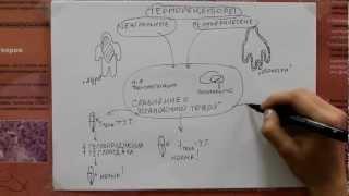 видео Терморегуляция