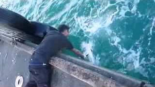 Парень поймал огромного желтохвоста голыми руками   Подборка видео от 09 12 2013