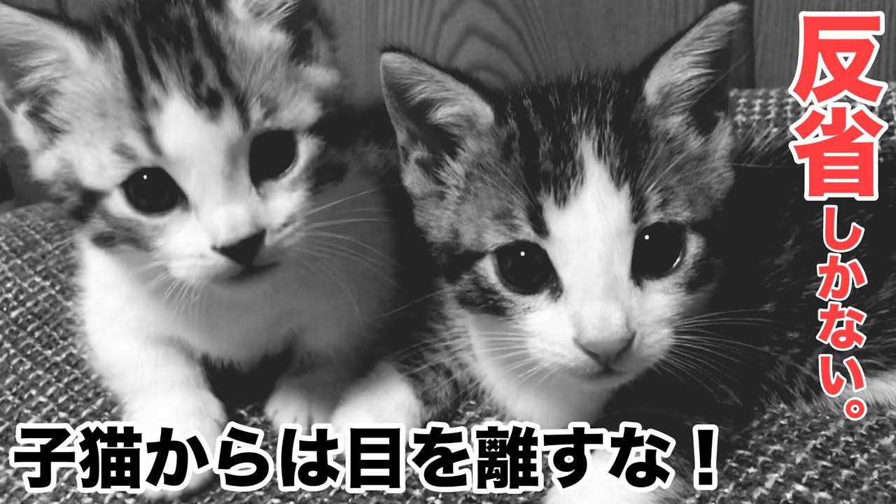 【注意】危うく子猫を失うところでした[潜む危険]