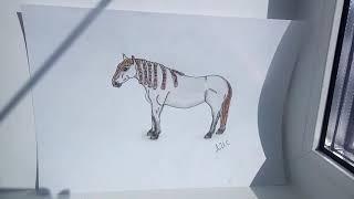 Мои рисунки фигурок лошадей шляйх