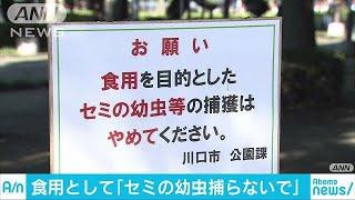 埼玉県川口市の公園に「食用としてセミの幼虫の捕獲はやめて下さい」と...