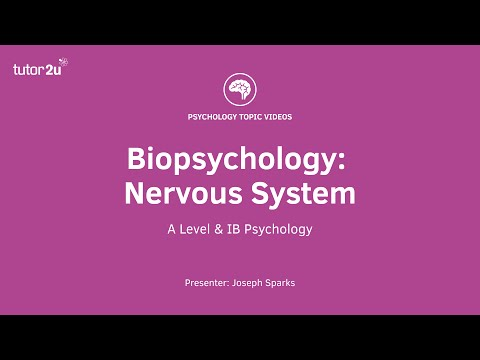 Biopsychology: Nervous System Explained