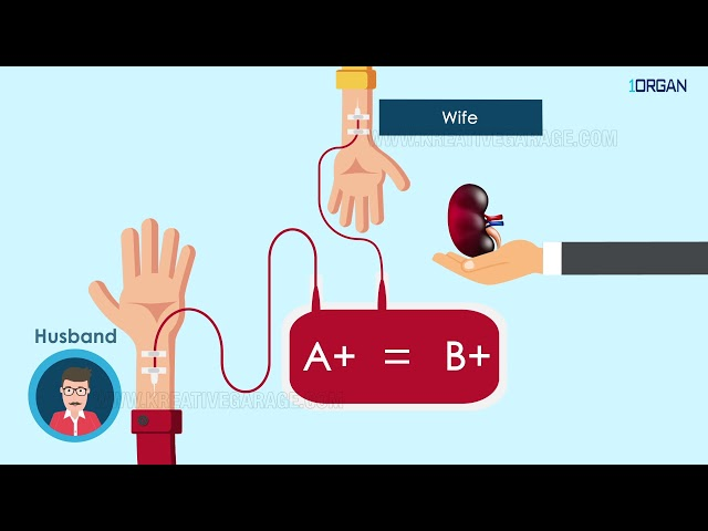 Explainer Video for 1 Organ App | Kreative Garage Studios | Mumbai, India