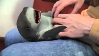 The shark like tickling (3D funny) | ����� �������� ������� (3D ������)