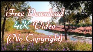 [무료영상] 핑크뮬리 와 아름다운 가을 풍경, 디지털 …
