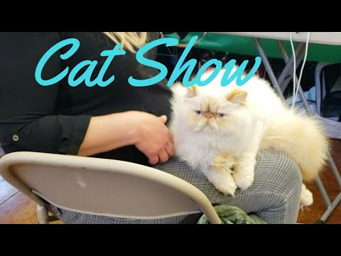 CAT SHOW| Lincoln State Cat Club Benefit & Event