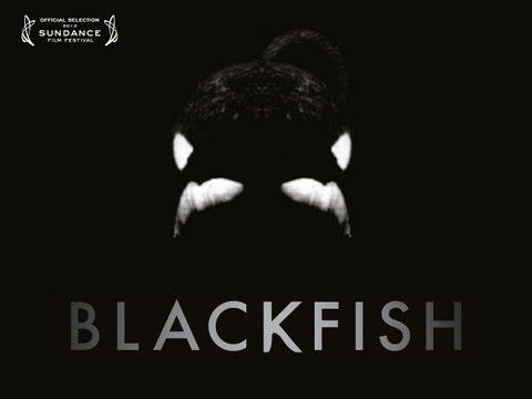 Blackfish trailers