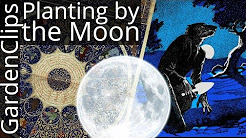 Gardening by Moon Phases - An Agnostic look at Planting by the Moon and Astrological Signs