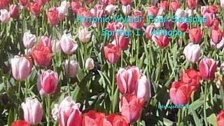 Vivaldi Four Seasons Spring I Allegro
