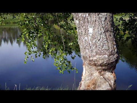 Прогулка в лес за грибами весной 2019. Красивая природа дальнего Подмосковья. Музыка для души