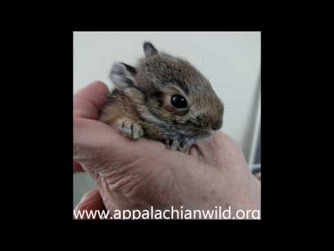 Caring For Cottontails - Saving Wild Lives!