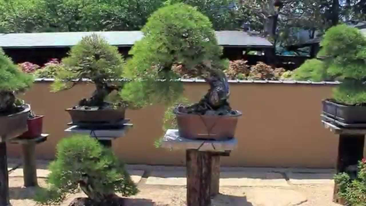 EDBONSAIblog Bonsai Scenes Japan
