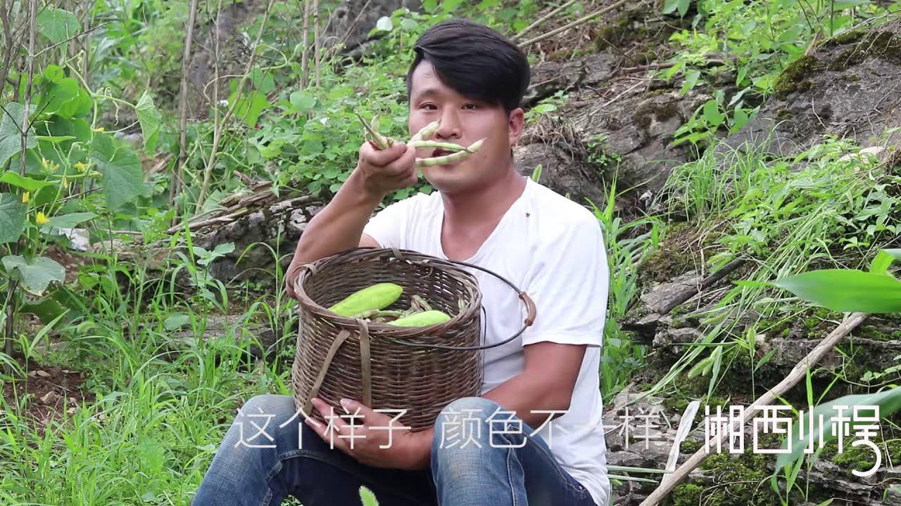 爷爷种的豆角,湘西小程到菜园摘,发现豆角有些不一样