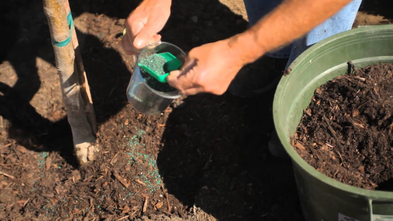 how to grow an apple tree in your front yard fall u0026 winter