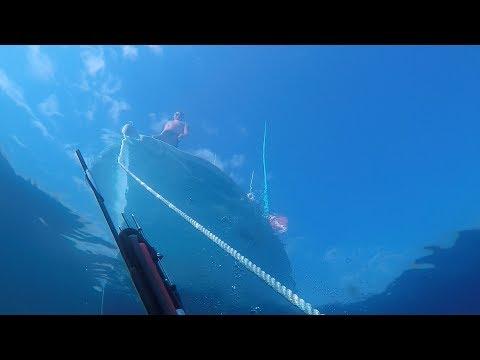 Spearfishing South Carolina - June 2017