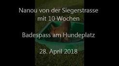 2018 04 28 hundeschule wiener neustadt - nanou badespass