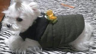 노미싱))강아지옷 패딩만들기