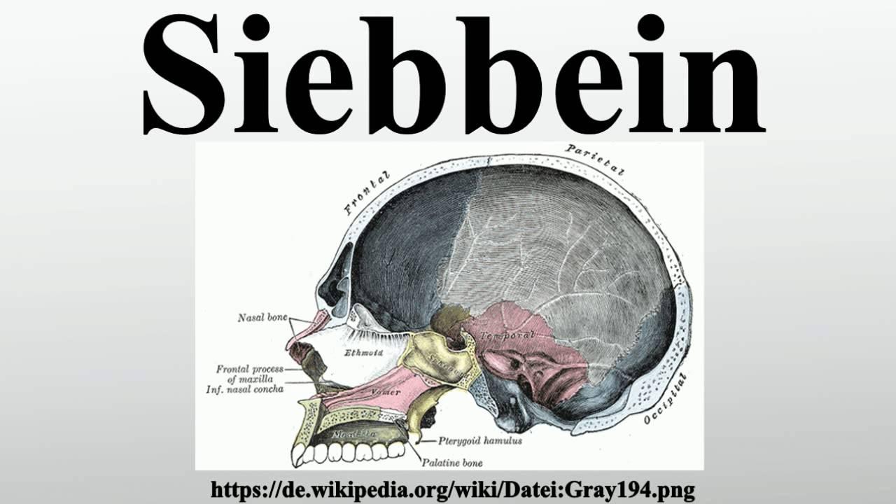 Siebbein - YouTube