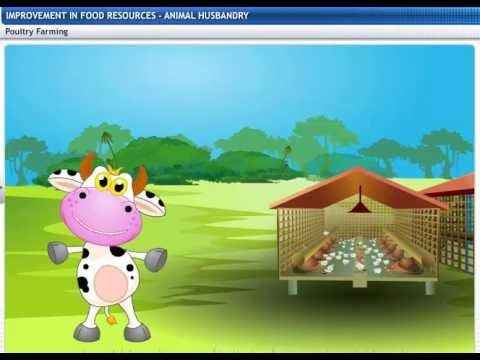 CBSE Class 9 Science, Improvement in Food Resources -2, Animal Husbandry
